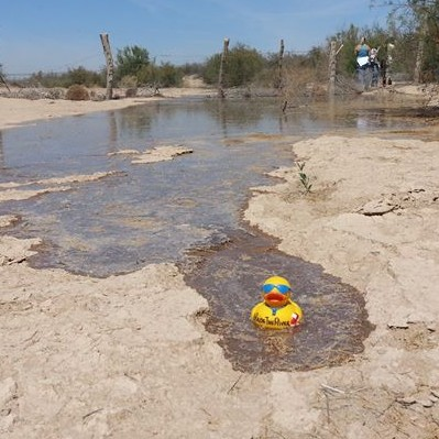 The actual Colorado River Ducky at the crest of the pulse flow.